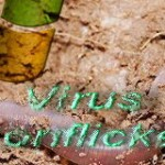 conflicker_worm_virus
