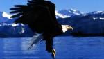 eagle-landing-alaska