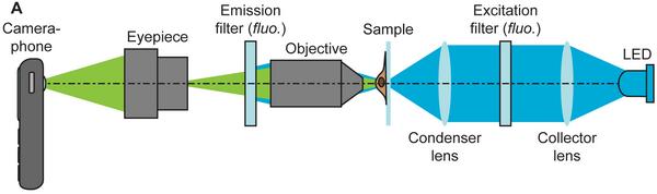 prinsip-kerja-cellscope-diagram-adalah
